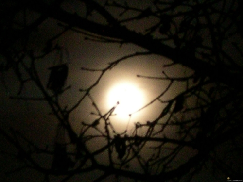 moon through fog