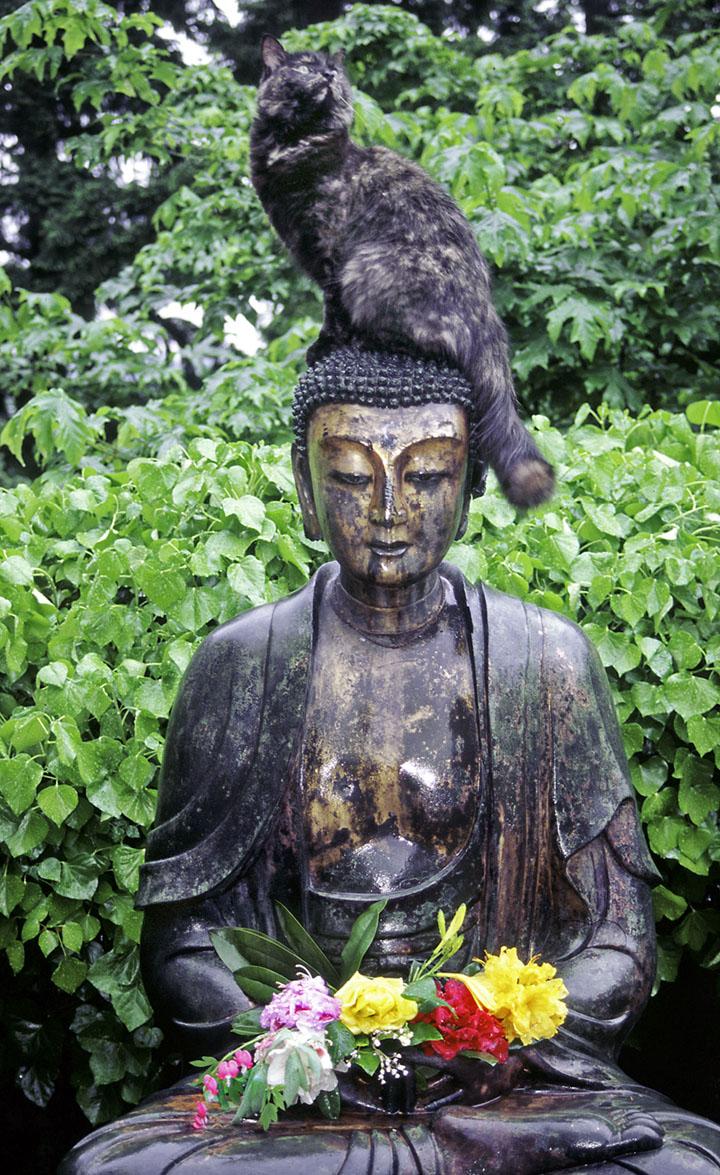 adding buddha and cat