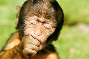 baby_macaque