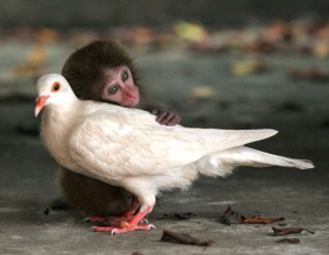 babymacaque_withbirdfriend