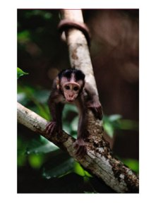 close-view-of-a-baby-macaque