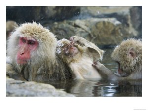 ostoo-00000026-001japanese-macaques-or-snow-monkeys-three-monkeys-in-hot-spring-with-infant-in-the-middle-japan-posters1