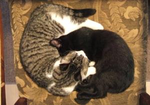 tao_of_kitties