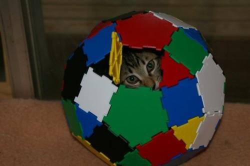 cat-bucky-ball