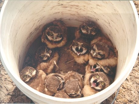 bucket-of-owls