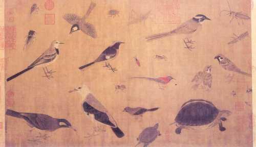 tangbirds