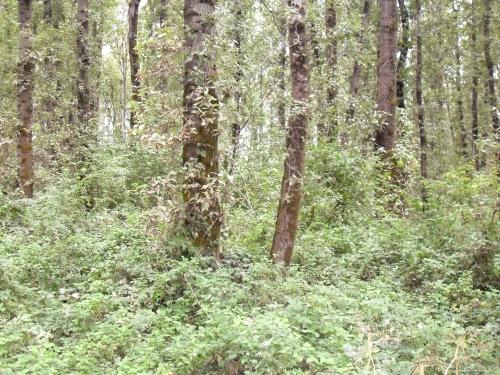 kp-woods