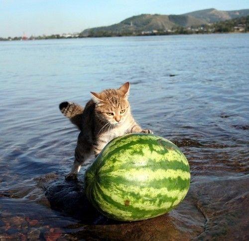 Cat 'n melon