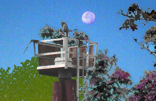 Bird, tower, moon- composit of several pictures