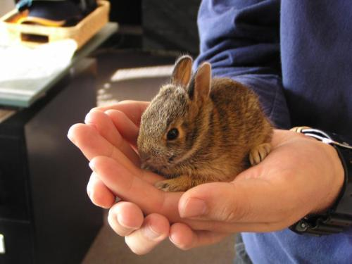 Palm.Bunny