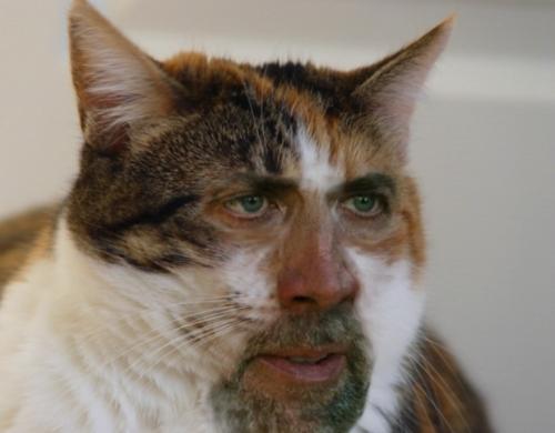 nic_cage_cat